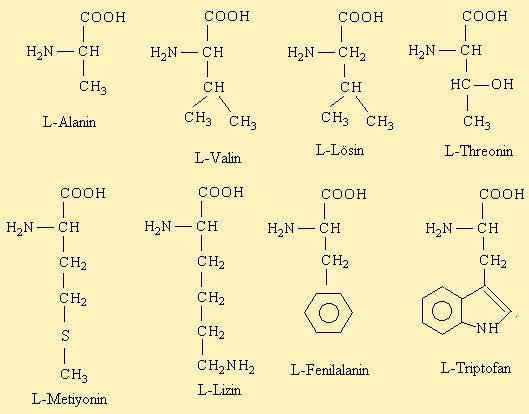 Aminoasitler ve Proteinler